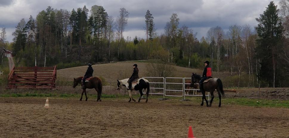 Lännenratsastuskokeilu – Western Riding Tryout 21.11.